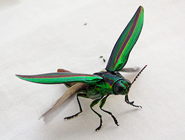 insect01.jpg
