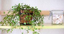 wireplant.jpg