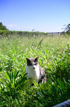 cat_in_grass01.jpg