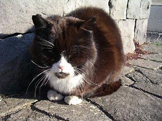 sennin_cat.jpg