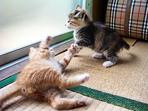 catplay01.jpg