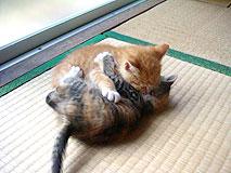 catplay02.jpg