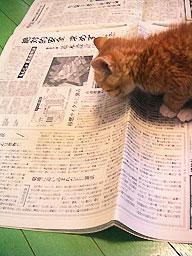newspaper02.jpg