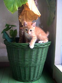kiku_with_plant.jpg