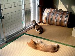 relax_at_washitsu01.jpg