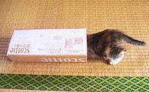 tissuecase02.jpg