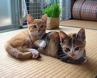 2shot_on_tatami.jpg