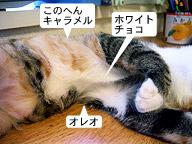 sweetcat02.jpg