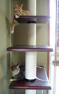 cats_on_tower01.jpg