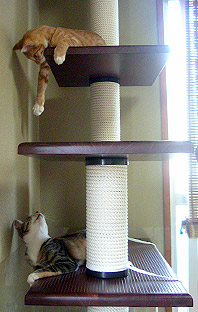 cats_on_tower02.jpg