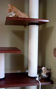 cats_on_tower03.jpg