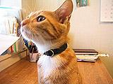 collar01.jpg