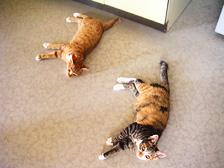 lyingcats.jpg