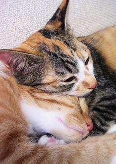 sleeping_together.jpg