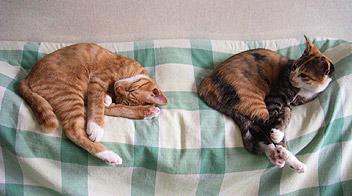 sleeping_twins.jpg