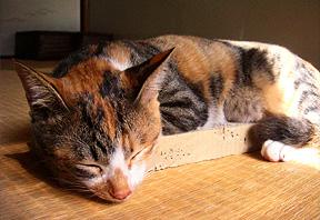 miru_sleeping.jpg