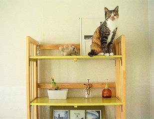 displayed_cat.jpg