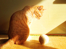 ball03.jpg