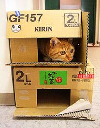 box_building01.jpg