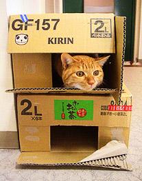 box_building02.jpg