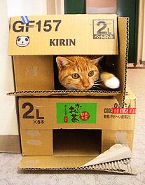 box_building03.jpg