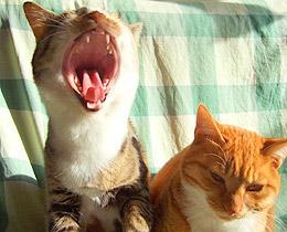 yawn2.jpg