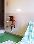 jump06.jpg