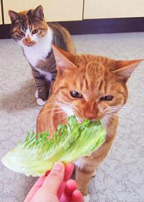 lettuce06.jpg