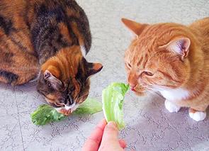 lettuce07.jpg