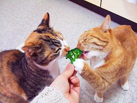broccoli02.jpg