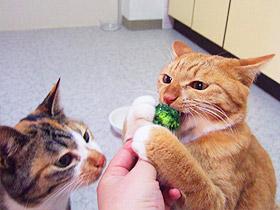broccoli03.jpg