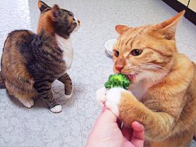 broccoli04.jpg