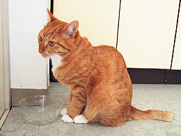 drinking_water03.jpg