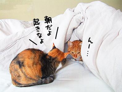 wakeup_kiku.jpg