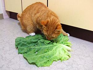 cabbage04.jpg