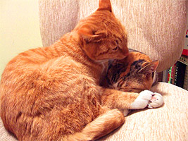 cats_hands01.jpg