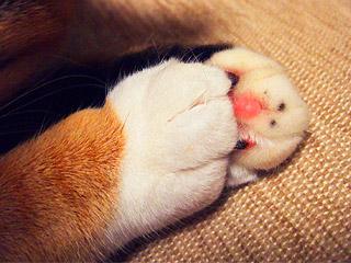 cats_hands02.jpg