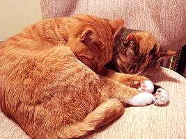 cats_hands03.jpg