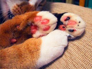cats_hands04.jpg