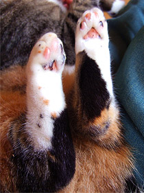 catsfeet02.jpg