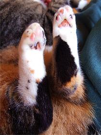 catsfeet02.jpg