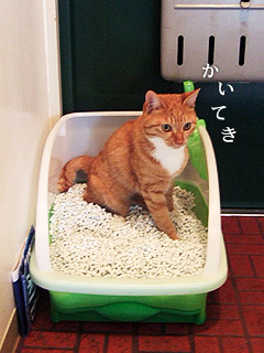first_toilet.jpg
