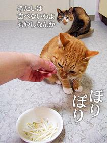 moyashi02.jpg