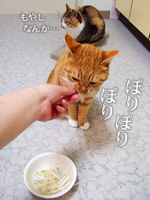 moyashi03.jpg