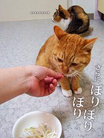 moyashi04.jpg
