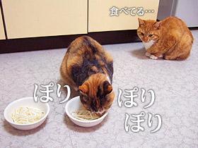 moyashi05.jpg