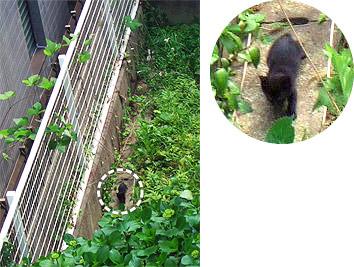 straycat01.jpg