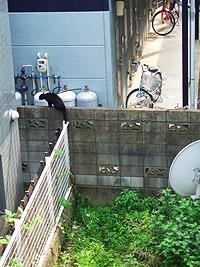 straycat02.jpg