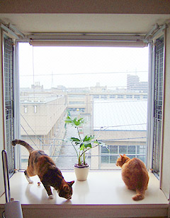 windowcats01.jpg