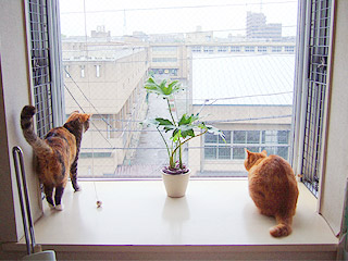 windowcats03.jpg
